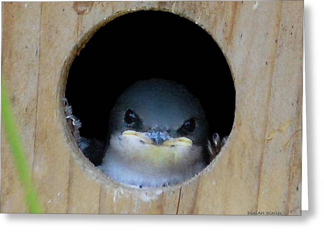 Swallow Chicks Greeting Cards - Barn Swallow Chick Greeting Card by DigiArt Diaries by Vicky B Fuller