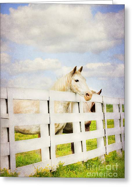 Kentucky Horse Park Photographs Greeting Cards - Barn Yard Dreamer Greeting Card by Darren Fisher