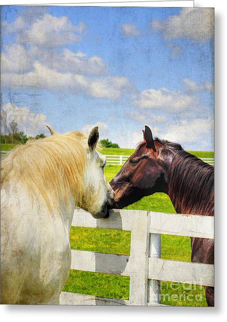 Kentucky Horse Park Photographs Greeting Cards - Barn Yard Kisses Greeting Card by Darren Fisher
