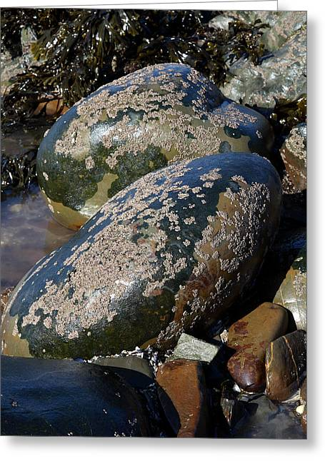 Moist Greeting Cards - Barnacle Covered Boulders Greeting Card by Dr Keith Wheeler