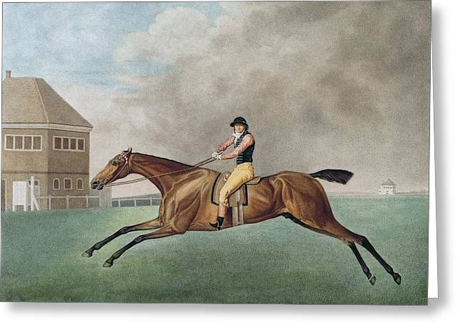 1794 Greeting Cards - Baronet Greeting Card by George Stubbs