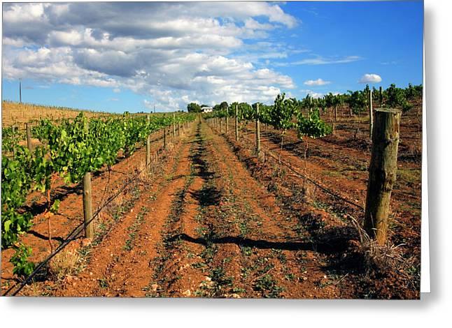 Grape Vineyard Greeting Cards - Barossa Vineyard Greeting Card by Mike  Dawson
