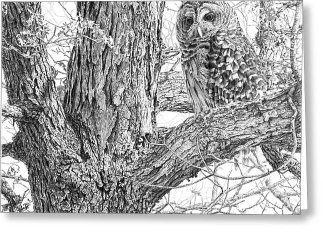 Raptor Drawings Greeting Cards - Barred Owl Greeting Card by Craig Carlson