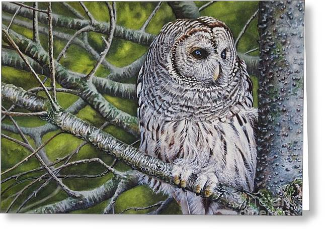 Bird On Tree Paintings Greeting Cards - Barred Owl Greeting Card by Greg Halom