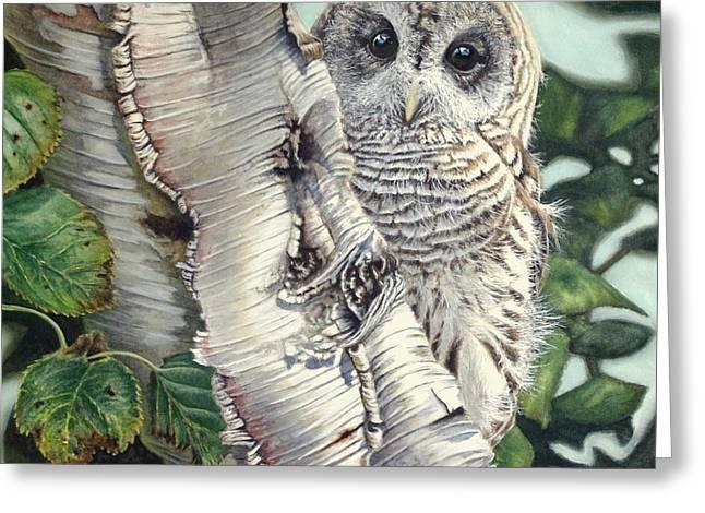 Avian Art Greeting Cards - Barred Owl II Greeting Card by Greg Halom