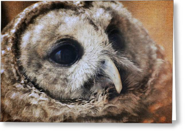 Cute Owl Greeting Cards - Barred Owl Greeting Card by Jai Johnson