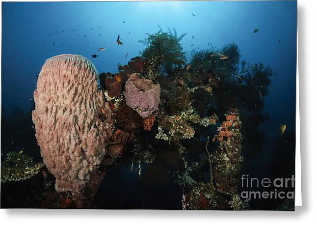 Barrel Sponge On Liberty Wreck, Bali Greeting Card by Todd Winner