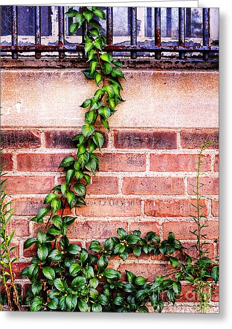 Bar Photographs Greeting Cards - Bars And Ivy Greeting Card by HD Connelly