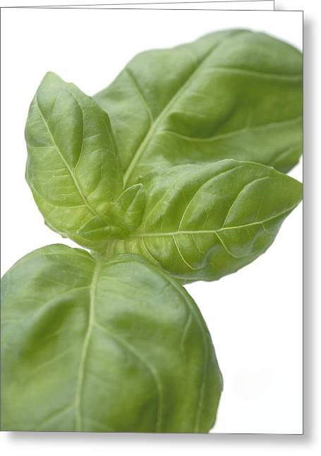 Italian Kitchen Greeting Cards - Basil Leaves Greeting Card by Jon Stokes