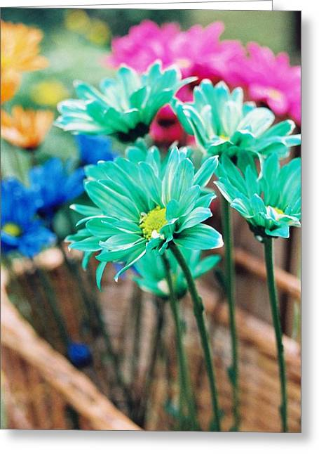 Flower Display Greeting Cards - Basket of Flowers Greeting Card by Toni Hopper