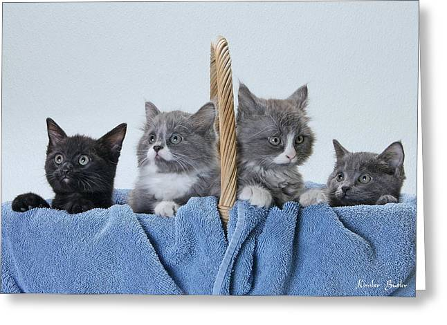 Photos Of Kittens Greeting Cards - Basketful of cuteness Greeting Card by Kimber  Butler