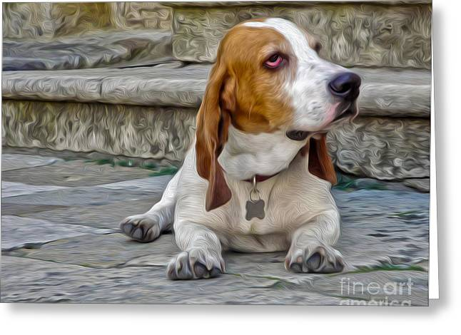 Gregory Dyer Greeting Cards - Basset Hound Greeting Card by Gregory Dyer