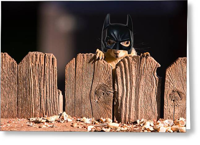 Bushy Tail Greeting Cards - Bat Squirrel  the Cape Crusader known for putting away nuts.  Greeting Card by James BO  Insogna