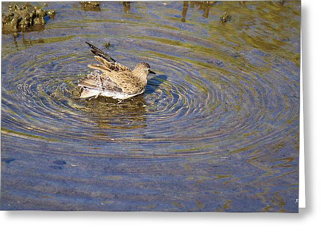 Wildlife Genre Greeting Cards - Bath Time Greeting Card by Roena King