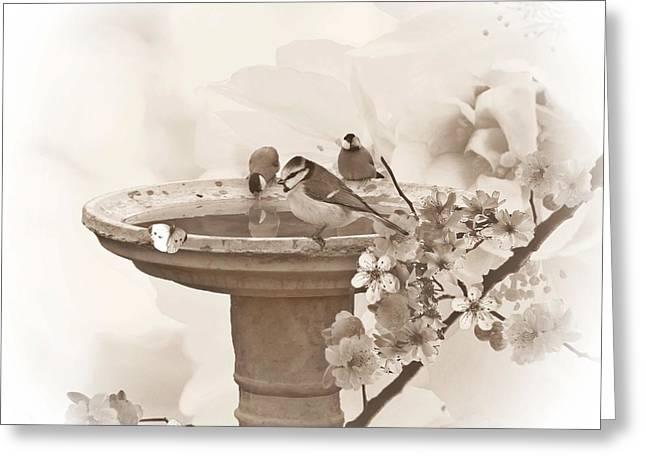 Bird Bath Greeting Cards - Bath time Greeting Card by Sharon Lisa Clarke