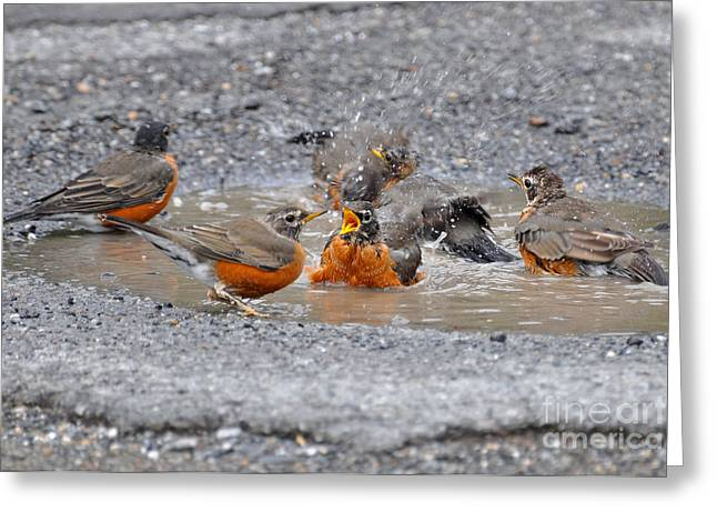 Bird Bath Greeting Cards - Bath Time Greeting Card by Todd Hostetter