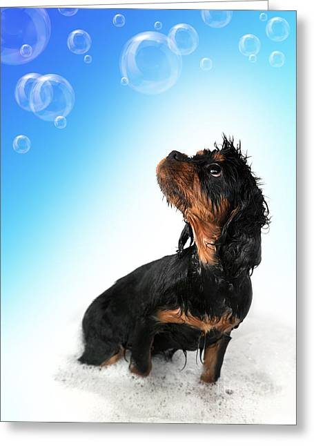 Pedigree Greeting Cards - Bathtime fun Greeting Card by Jane Rix
