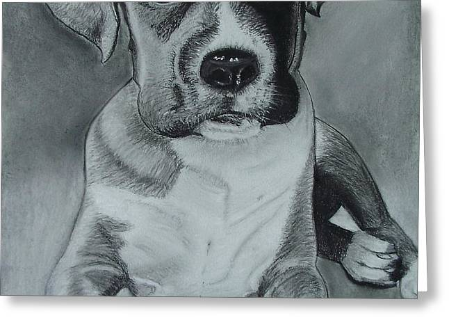 Baxter Greeting Card by Kim Shayler