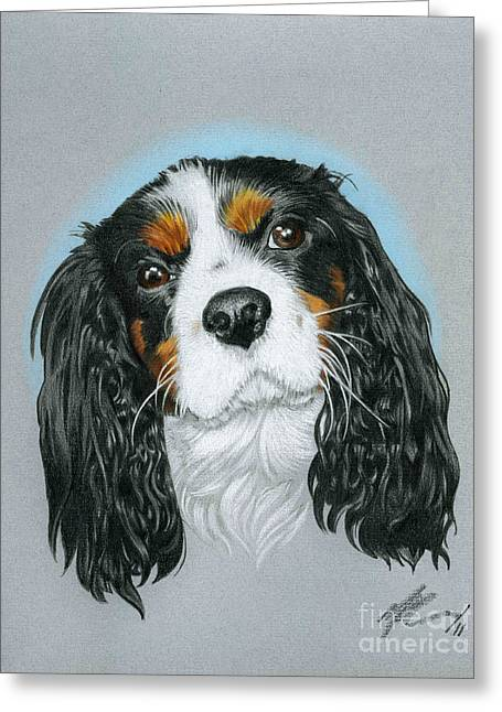 Spaniel Drawings Greeting Cards - Baxter Greeting Card by Marshall Robinson