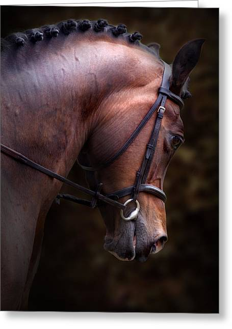 Show Horse Greeting Cards - Bay Horse Head Greeting Card by Ethiriel  Photography