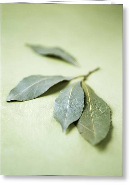 Nobilis Greeting Cards - Bay Leaves (laurus Nobilis) Greeting Card by Veronique Leplat