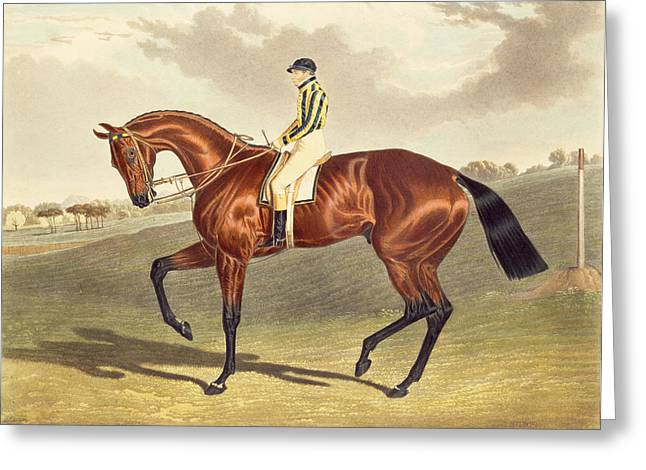 Jockeys Greeting Cards - Bay Middleton Winner of the Derby in 1836 Greeting Card by John Frederick Herring Snr