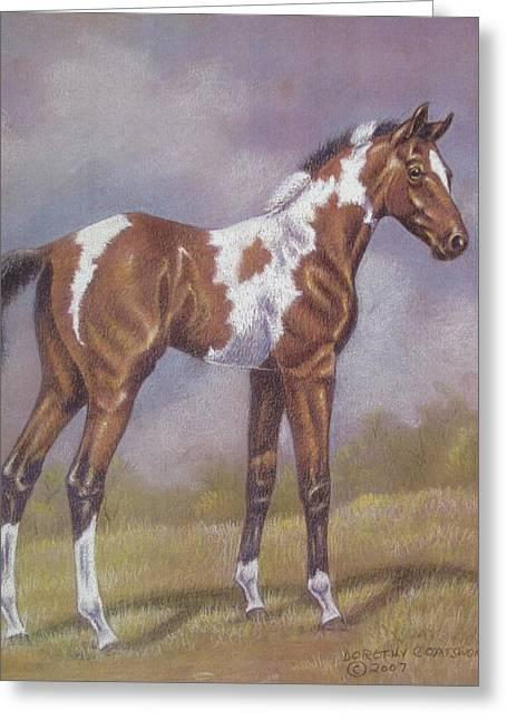 Dorothy Coatsworth Greeting Cards - Bay Paint Foal Greeting Card by Dorothy Coatsworth