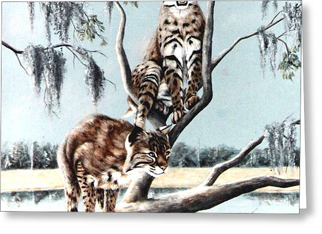 Bayou Bobcats Greeting Card by DiDi Higginbotham