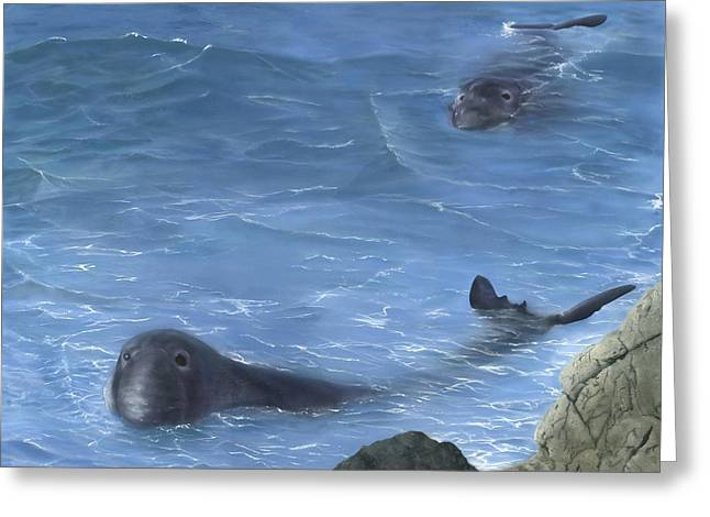 Elephant Seals Paintings Greeting Cards - Baywatch Greeting Card by Charles Parks