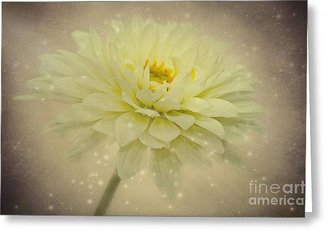 Aster Mixed Media Greeting Cards - Be a star Greeting Card by Angela Doelling AD DESIGN Photo and PhotoArt