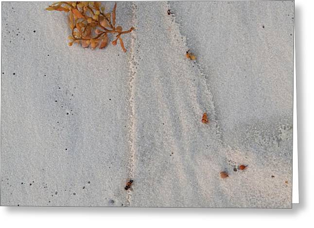 Beach Art I Greeting Card by Charles Warren