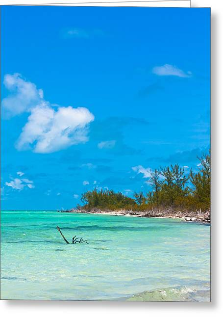 Topple Greeting Cards - Beach at North Bimini Greeting Card by Ed Gleichman