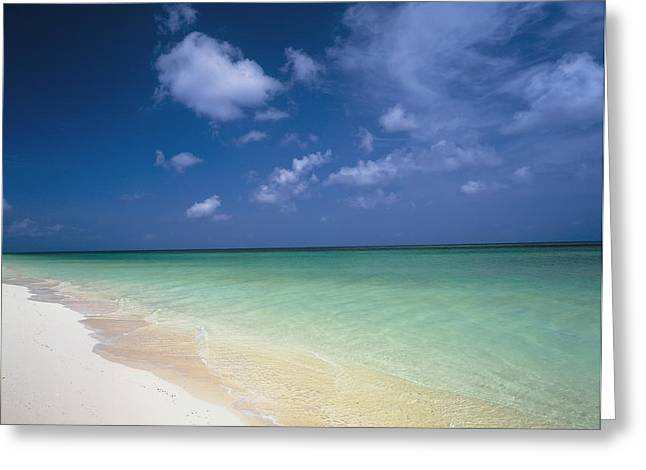 Turks And Caicos Islands Greeting Cards - Beach At Parrot Cay, Turks And Caicos Greeting Card by Axiom Photographic