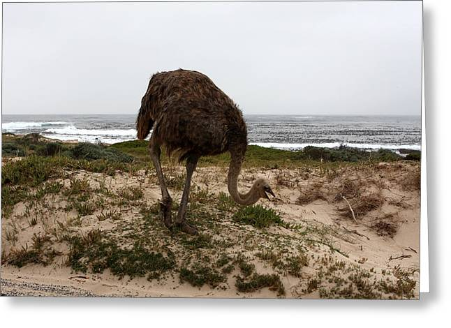 Ostrich Feathers Photographs Greeting Cards - Beach Bird Greeting Card by Aidan Moran