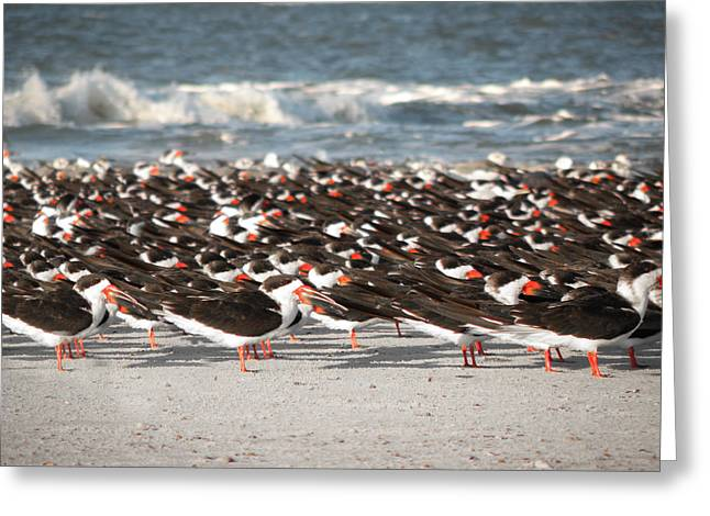 Georgia Nature Greeting Cards - Beach Birds Greeting Card by Steven  Michael