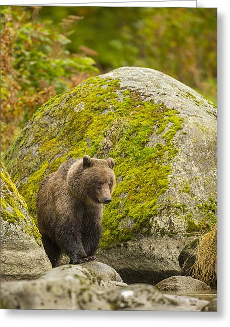 Prints Of Alaska Greeting Cards - Beach Combing Greeting Card by Tim Grams