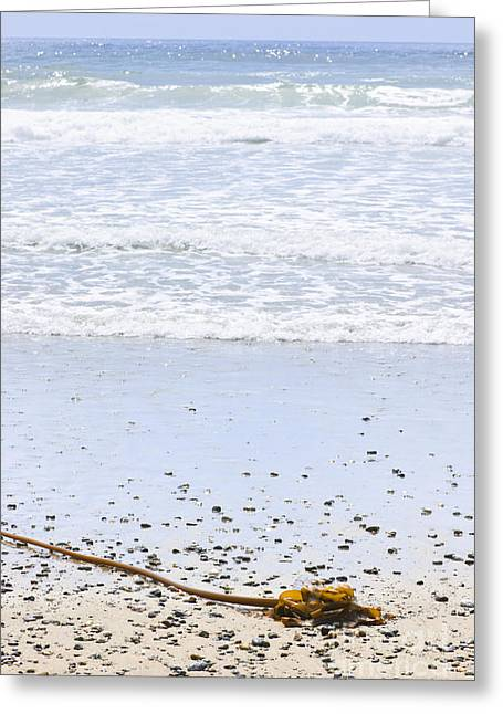 British Columbia Greeting Cards - Beach detail on Pacific ocean coast Greeting Card by Elena Elisseeva