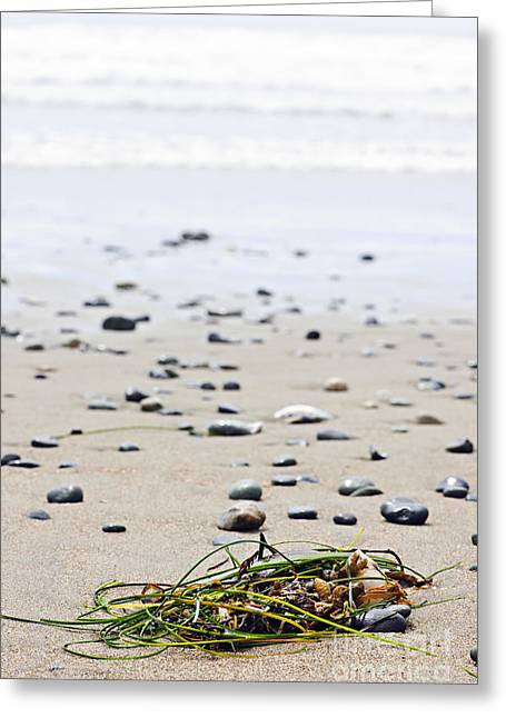 British Columbia Greeting Cards - Beach detail on Pacific ocean coast of Canada Greeting Card by Elena Elisseeva