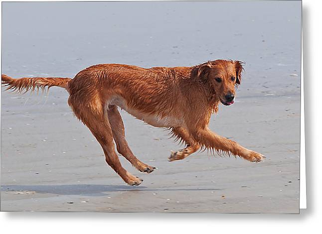 Dog Play Beach Greeting Cards - Beach Dog Greeting Card by Kenneth Albin