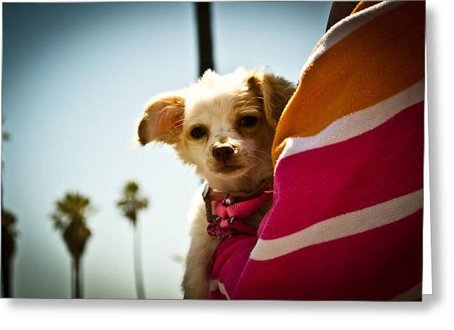 Beach Dog Greeting Card by Steven Baker