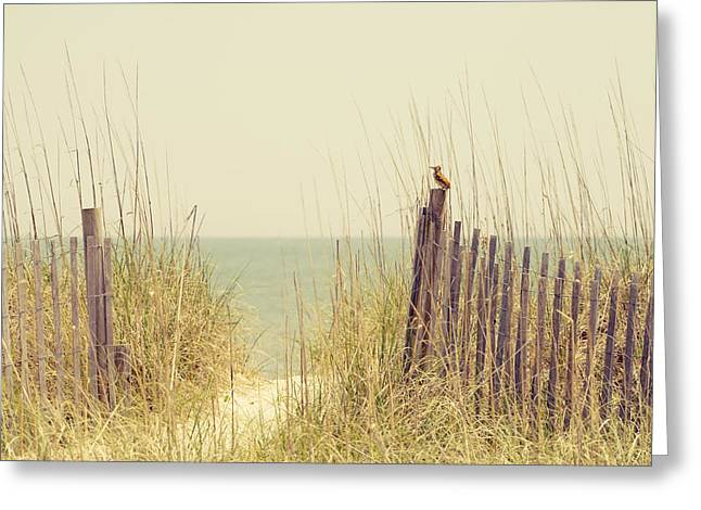 Myrtle Beach Ocean Photography Greeting Cards - Beach Fence in Grassy Dune South Carolina Greeting Card by Stephanie McDowell