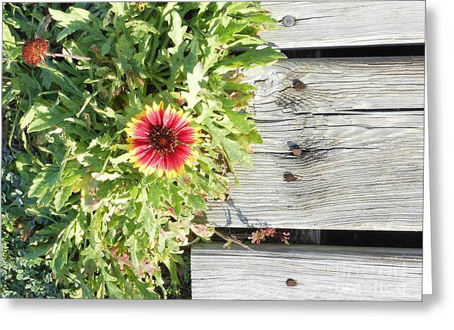 Walkway To The Beach Greeting Cards - Beach Flower Greeting Card by Beebe  Barksdale-Bruner
