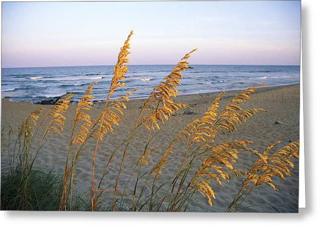 Sea Oats Greeting Cards - Beach Scene With Sea Oats Greeting Card by Steve Winter