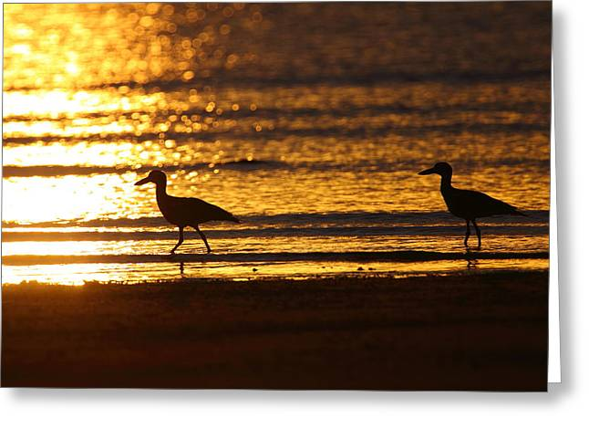 Beach Stone-curlews At Sunset Greeting Card by Bruce J Robinson