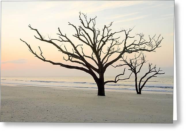 Bone Yard Greeting Cards - Beach Trees at Botany Bay South Carolina Greeting Card by Bill Swindaman