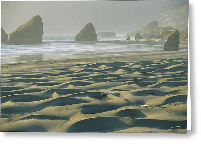 Oregon Pistol River Greeting Cards - Beach With Dunes And Seastack Rocks Greeting Card by Skip Brown