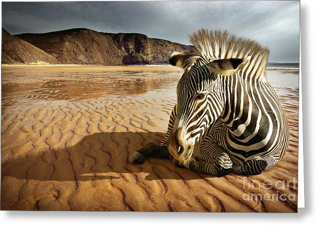 Concept Photographs Greeting Cards - Beach Zebra Greeting Card by Carlos Caetano