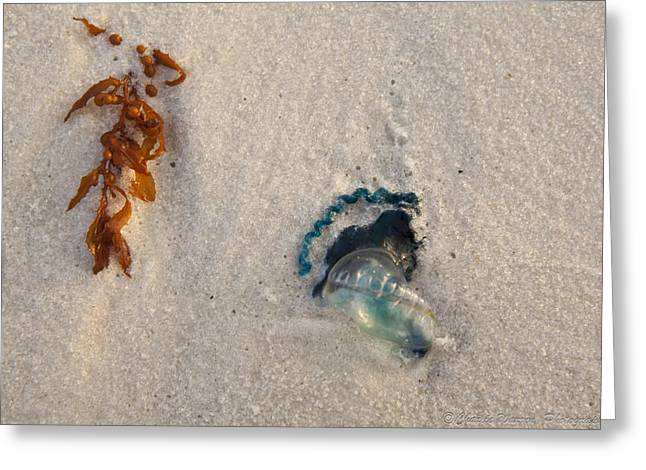 Beached Greeting Card by Charles Warren