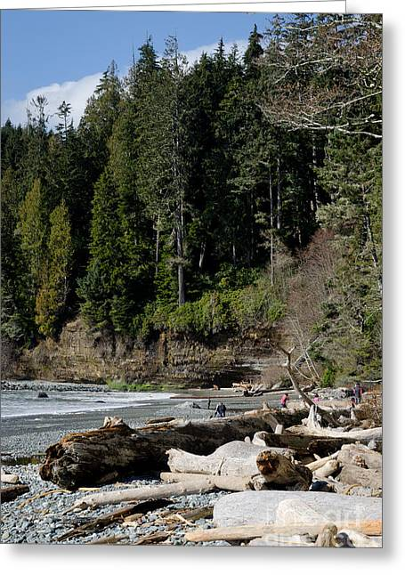 China Beach Greeting Cards - BEACHED LOGS china beach vancouver island BC Greeting Card by Andy Smy