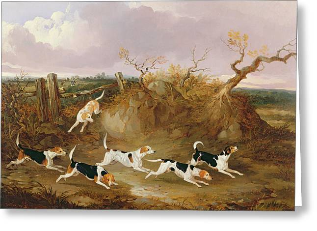 Hound Hounds Greeting Cards - Beagles in Full Cry Greeting Card by John Dalby